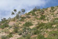 Cabo-Pulmo-Hillside