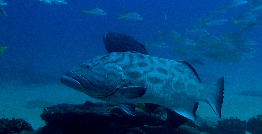 Grouper corrected